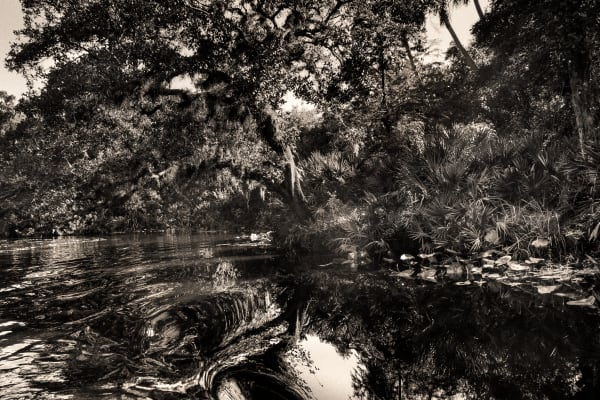 Peace River, Fla 3 Photography Art | CS Gray Photograpy