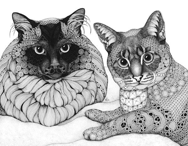 CATS  canvas