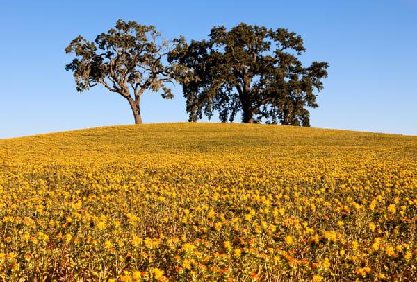 Oak Ridge Bloom Photography Art | Josh Kimball Photography