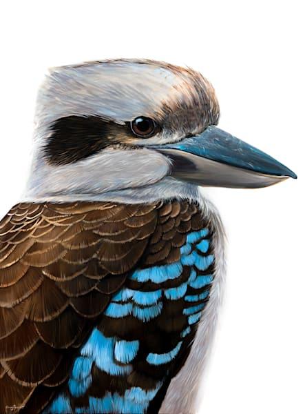 Charlie - Kookaburra