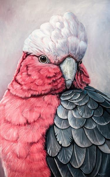 Gus - Galah Cockatoo