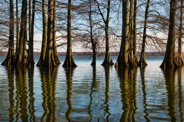 Cypress Trees Reflections  5490 Fs Art | Koral Martin Fine Art Photography
