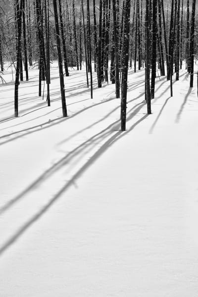Shadowlands  - Woodland Photographs Yellowstone National Park - Fine Art Prints on Metal, Canvas, Paper & More By Kevin Odette Photography