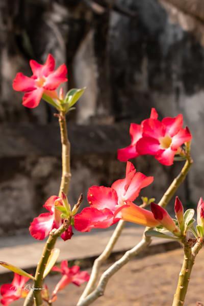 Floral 1 | Thailand Series | Shop Prints | Robert Shugarman Photography