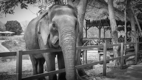 Elephant Refuge 6 | Thailand Series | Shop Prints | Robert Shugarman Photography