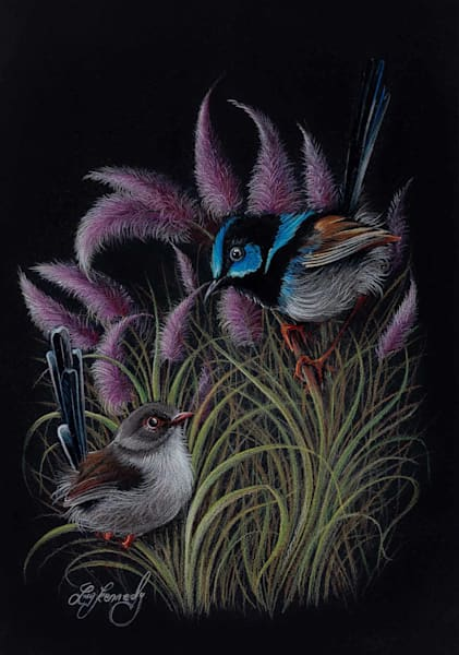 Fairy Wren Duo