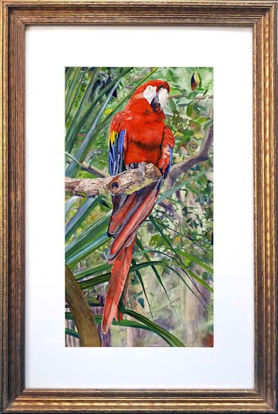 Tropical Red Scarlet Macaw Parrot Original Fine Art