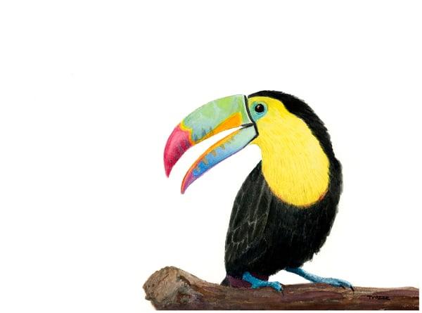 Toucan Art | Frank Trozzo