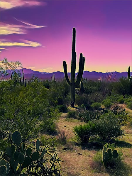 TucsonMtnCactus