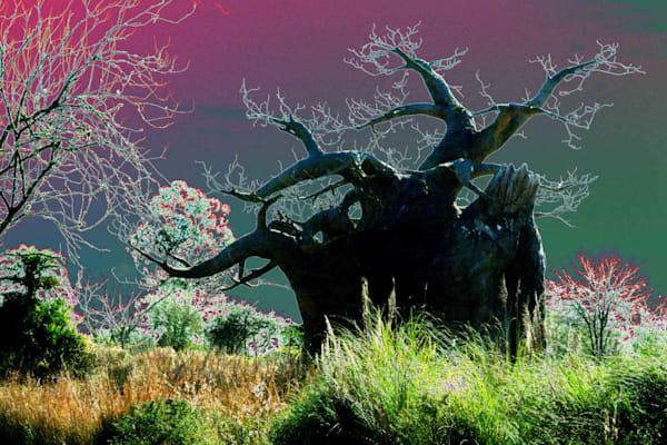 Baobab Tree Art | DocSaundersPhotography