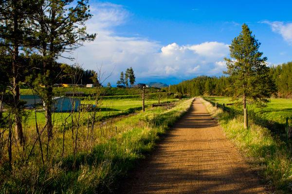 Mickelson Trail  Art | DocSaundersPhotography