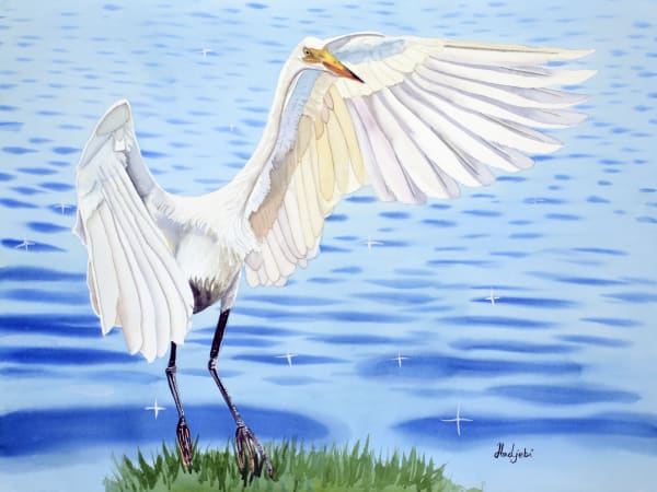 Watercolors of various animals, mammals, birds, reptiles and more!
