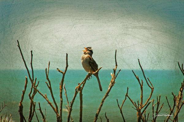 Birdsong   Art | JackieRobbinsStudio