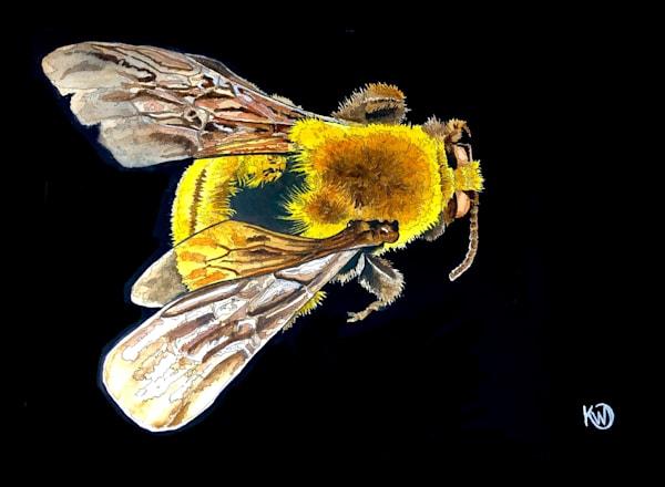 Morrison Bumblebee