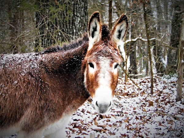 GAttanasio-Darling-Donkey