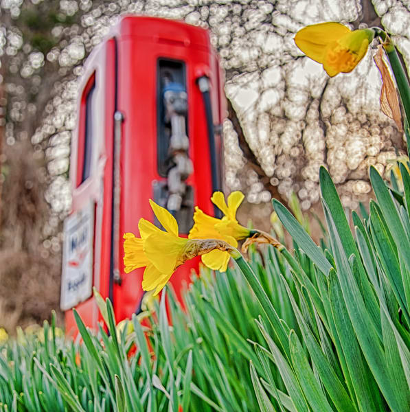 Chilmark Mobile Pump Daffodil Closeup Art | Michael Blanchard Inspirational Photography - Crossroads Gallery