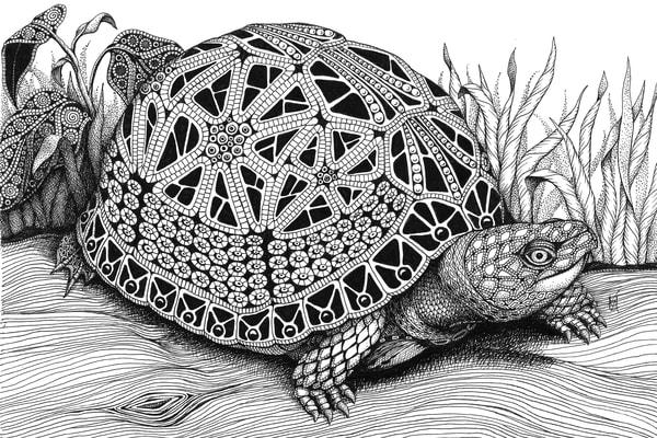 "Box Turtle by Kristin Moger ""Seriously Fun Art"""