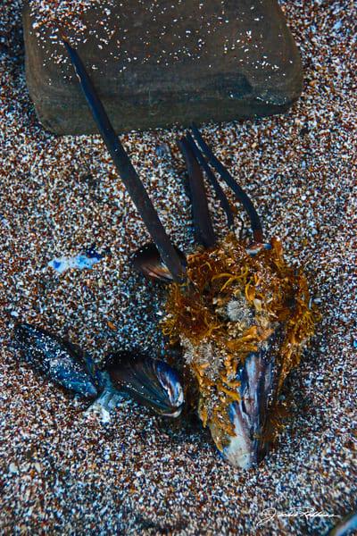 Coastal Still Life Iii Art | JackieRobbinsStudio