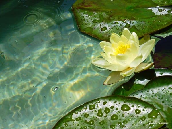 Yellow Lotus  Art | JackieRobbinsStudio
