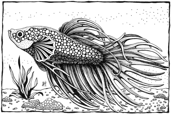 "Betta Fish | Kristin Moger ""Seriously Fun Art"""