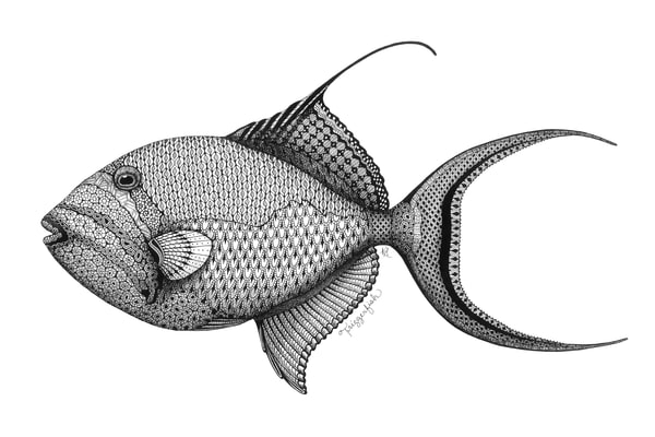 "Triggerfish | Kristin Moger ""Seriously Fun Art"""