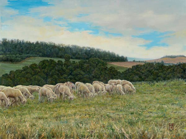 Tuscan Sheep by Holly Schapker.