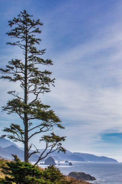Haystack Rock, Cannon Beach, beach, ocean, Oregon, pacific, tree