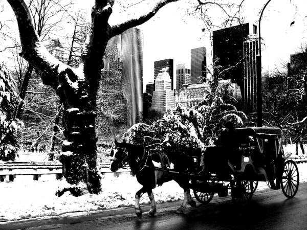 Horse In Central Park Art | kihlstromfineart