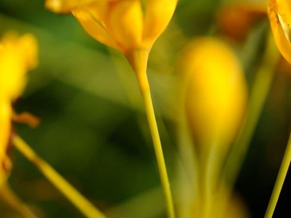 Scenic 10 Photography Art | mikelindwasserphotography