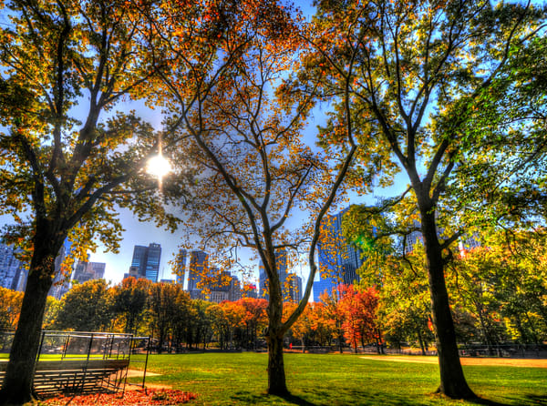 Central Park 5 Photography Art   mikelindwasserphotography