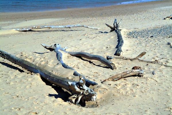 Whitefish Point Driftwood Art | DocSaundersPhotography