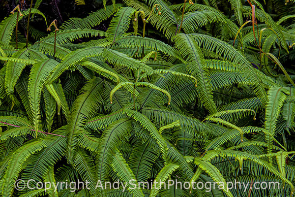 Fine art photograph of Fern Patterns