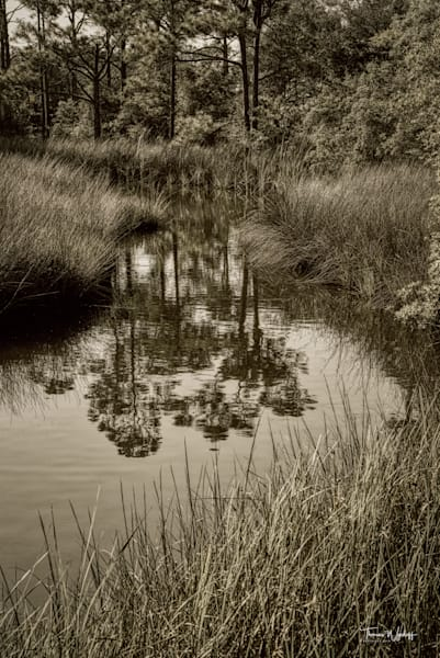 Reflecting Pond, Baldwin County, 2020. Black and White photograph for sale by Thomas Wyckoff.