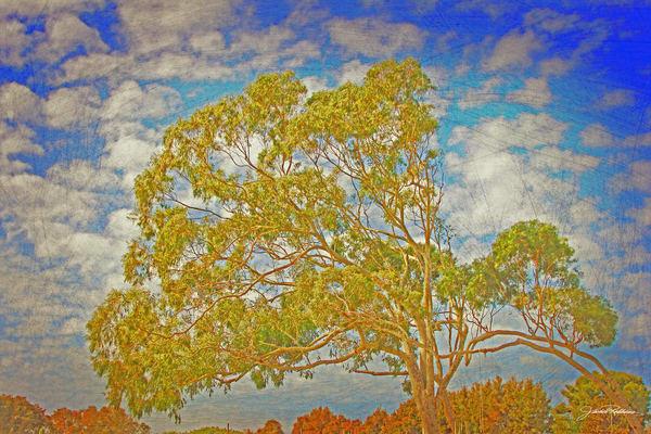 Tree Of Life Backdrop Ii  Art | JackieRobbinsStudio