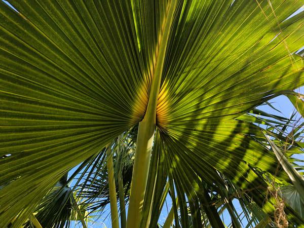Palm Joy 12 Art Print