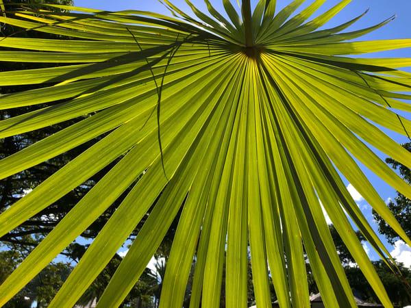 Palm Joy 10 Art Print