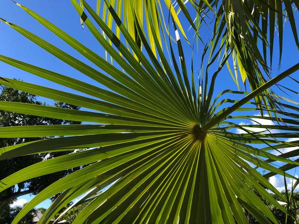 Palm Joy 6  Art | DBA George Delany Art