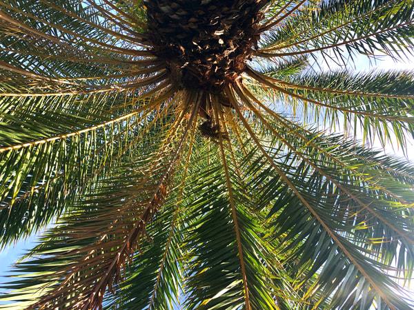 Palm Joy 7 Art Print