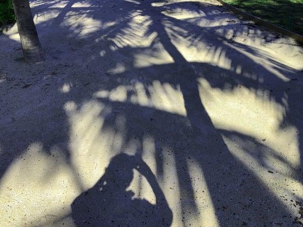 Palm Shadow Art 1