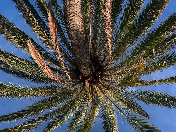 Palm Joy 3