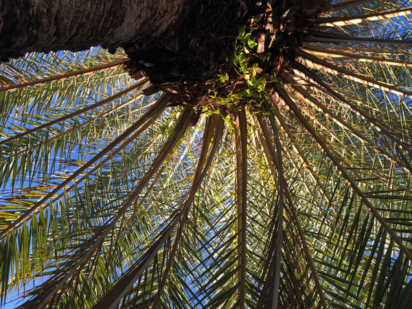 Palm Joy 1, photo by George Delany