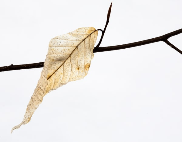 Last Leaf Photography Art | Robert Leaper Photography