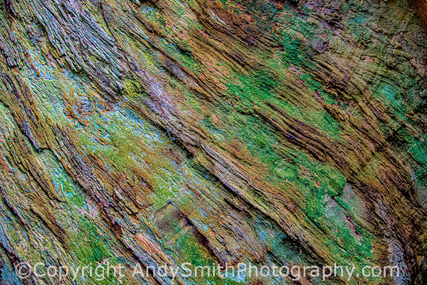 fine art photogrpah of patterns of a grandfather tree