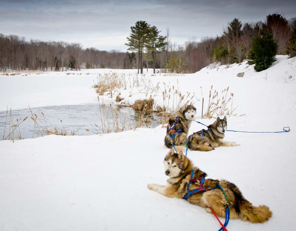 Sled Dogs Photography Art | Robert Leaper Photography