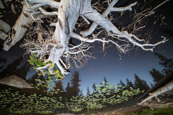 Life And Death Lilly Lake Art | Benko Art Gallery