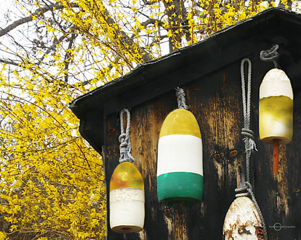 Forsythia And Buoys Art | Fred Marco Photography