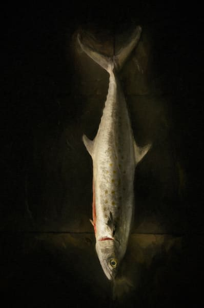 The Fish That Feed, Still life, Ben Fink art prints, photography
