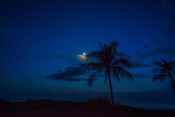 beach, palm tree, moon, stars, Kauai
