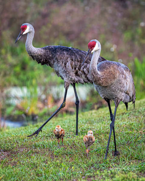 Meet The Crane Family