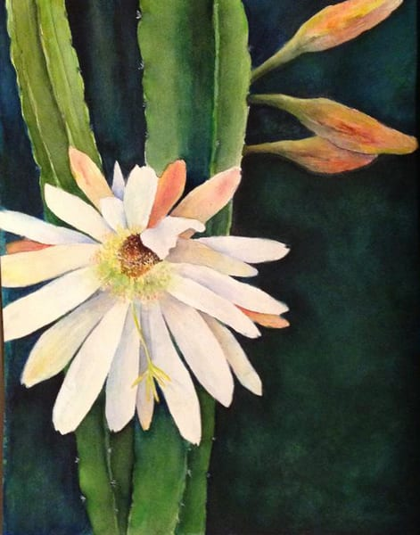 Night Blooming Cactus, From an Original Watercolor Painting